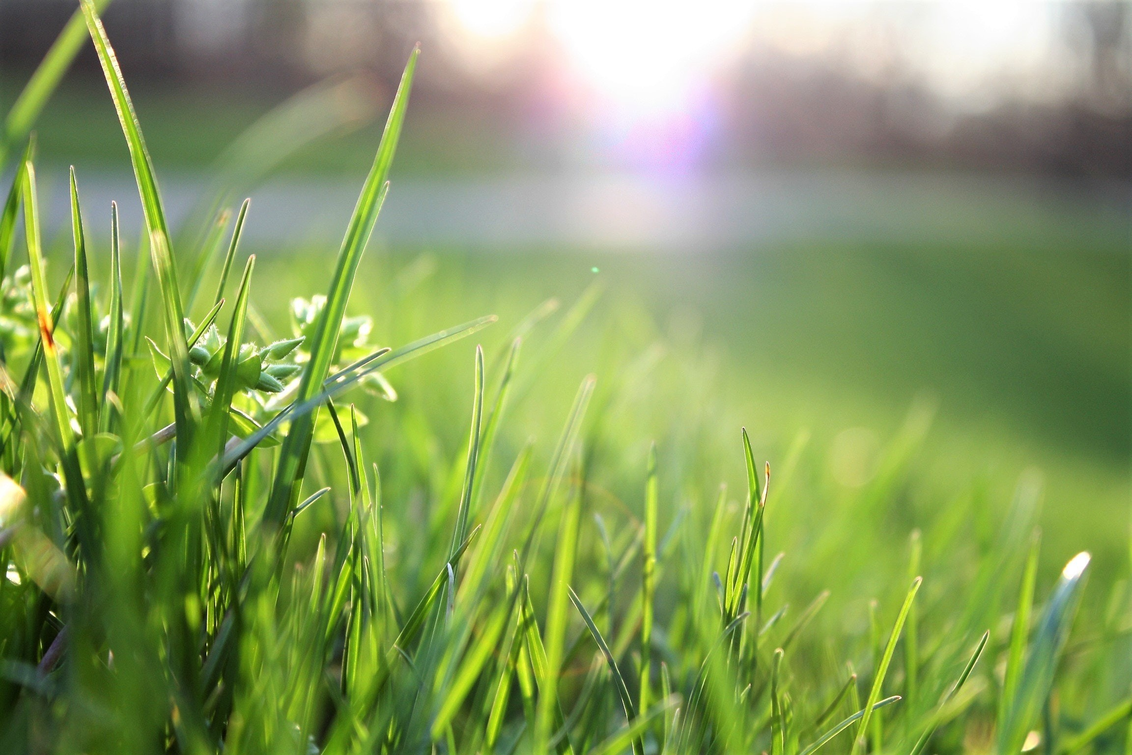 Więcej zieleni na placu Orła Białego